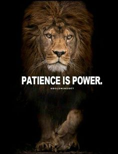 this image shows patience because of the lion background. the lion shows patience because in order to eat they have to sit, stalk and wait. in other words, its a survival skill because they have to wait and if not they don't eat. Inspirational Good Morning Messages, Inspirational Quotes About Success, Motivational Quotes For Life, Success Quotes, Great Quotes, Positive Quotes, Super Quotes, Inspirational Lion Quotes, Worth The Wait Quotes