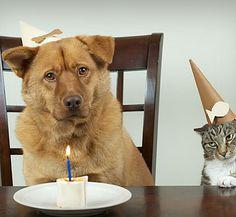 We celebrated my dog's birthday yesterday.    昨日うちの犬の誕生日のお祝いをした。