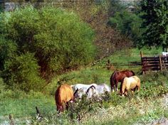 Horse Pasture  All rights reserved © Angelandspot