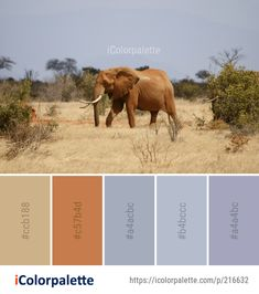 Color Palette Ideas from Elephant Elephants And Mammoths Wildlife Image Logo Color Schemes, Color Schemes Colour Palettes, Colour Pallete, Color Combos, Safari Theme Bedroom, Elephant Colour, Colour Board, African Safari, Color Inspiration