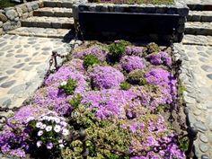 Graves of Poet Pablo Neruda and His Wife, Mathilde Urrutia    Isla Negra, Chile, November 2013