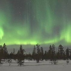 Kotatuli offers an atmospheric evening tour to the nature of Lapland, where we walk through the candlelit path and hope to see some northernlights on our way. Paths, Northern Lights, Tours, Explore, Nature, Travel, Naturaleza, Viajes, Destinations