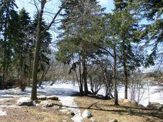 Grün im großen weißen Norden. Anhaltende Kälte und Erfahrung mit Meetup. Als wollte Kanada mir zeigen wie kalt es hier sein kann, gibt der Winter das Land...