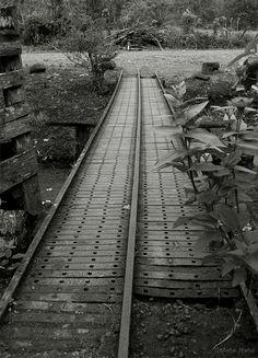 Foto Arturo Mora. Tema: Caminos o Senderos.