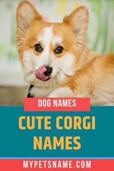 Maybe Corgis were thought to be enchanted because of their well-known cheerfulness. If you have a cheerful Corgi then make sure to choose from one of the 100 cute Corgi names we've compiled for you. Cute Pet Names, Corgi Names, Funny Names, Cute Corgi, Corgi Dog, Corgi Mix Breeds, Dog Breeds, Raining Cats And Dogs, Training Your Puppy