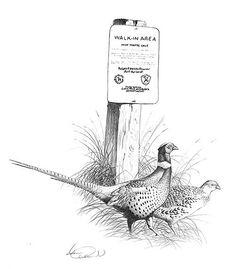 Pheasant_SDGFP_lg.jpg (500×572)
