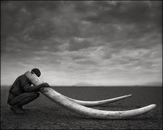 Bid now on Ranger with Tusks of Killed Elephant, Amboseli by Nick Brandt. View a wide Variety of artworks by Nick Brandt, now available for sale on artnet Auctions. Nick Brandt, Wildlife Photography, Animal Photography, Photography Books, Travel Photography, Theme Tattoo, Festival Photo, Concours Photo, Robert Frank