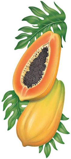 Mis Laminas para Decoupage (pág. 147) | Aprender manualidades es facilisimo.com Watercolor Fruit, Fruit Painting, Fabric Painting, Fruit Illustration, Food Illustrations, Botanical Illustration, Fruit And Veg, Fruits And Veggies, Funny Vegetables