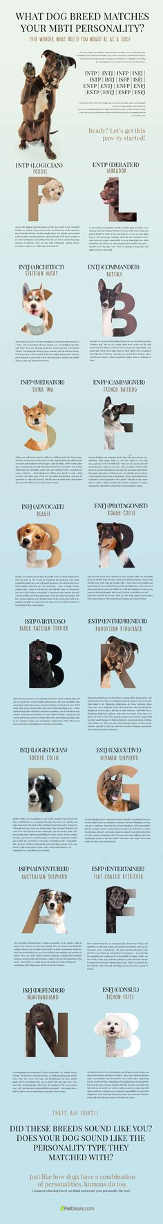 Every dog is unique just as every human is! But the fun lies in discovering the similarities that are there beyond the fur and the species, of course! So our pet-crazy team started a fun project that resulted in this Myers-Briggs Type Indicator for dogs! This infographic is just a fun way to see what characteristics certain breeds may have in common with our personality types! #infographics #pets