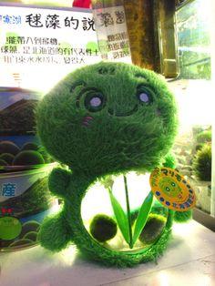 My body withers: Photo Kawaii Cute, Kawaii Girl, Kawaii Style, Marimo Moss Ball, How To Make Terrariums, Kawaii Room, Plushies, Dinosaur Stuffed Animal, Unique Gifts