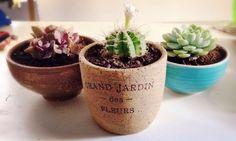 Cactus • Cups • Flowers • Coffee Mugs