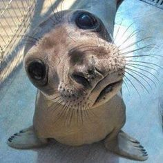 Seal pup with big eyes needs someone with a big heart.