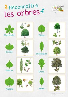 Science Room, Science And Nature, Tree Leaf Identification, Nature Posters, French School, School Posters, Plant Pictures, Nature Study, Gardens