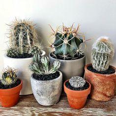 Assortment #cactus #cactuslove #succulent #succulove #desert #plant #nature #leafandclay #jungalowstyle #succulents #flower #flowerlove #garden #plants #instagood #photoftheday #picoftheday #instalike #beautiful #green #cactusrepost #bestoftheday #cactusclub #cacti #urbanjunglebloggers #love