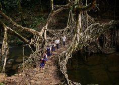 Οι πιο απίστευτες και αδιανόητες διαδρομές παιδιών προς τα σχολεία τους...  Μέσα στο δάσος, σε μια γέφυρα / ρίζα δέντρου, Ινδία