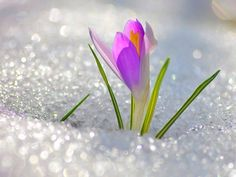 Beautiful flowers in the snow!
