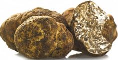 Truffles and how to teach a dog to hunt them.