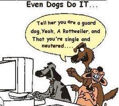 #mustlovedogs #dogs