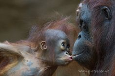 """""""Niah"""" und """"Nonja"""" - the kiss by PiavonSteegen on 500px"""