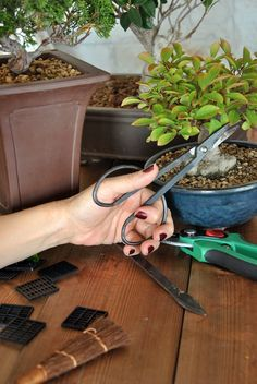 Pruning a Bonsai Tree