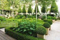 Hydrangea Annabelle with Box hedging and Box balls Formal Gardens, Outdoor Gardens, Modern Gardens, Japanese Gardens, White Gardens, Small Gardens, Hydrangea Annabelle, Formal Garden Design, French Formal Garden