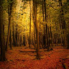 2048x2048 Wallpaper outono, floresta, paisagem