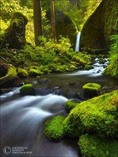 Paradise Falls - Oregon - Remember to help prevent the spread of terrestrial (land-based) invasive species // All Nature, Amazing Nature, Beautiful Waterfalls, Beautiful Landscapes, Places To Travel, Places To See, Natur Wallpaper, Paradise Falls, Oregon Waterfalls