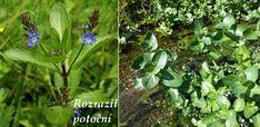 Byliny - Bylinky pro všechny Plants, Plant, Planets