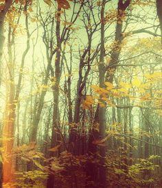 Dream State 2 . home decor . autumn art . trees . by joystclaire