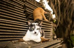 Cats living in Thailand: free by Kévin André - Photo 130164441 - 500px