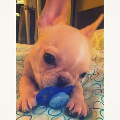 """""""I don't know what it is, but it feels great on my teeth!"""" 