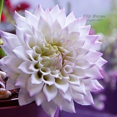 {A pretty Dahlia with white petals blushed with lavender by PETUNYALARIM} Sugar Paste Flowers, Wafer Paper Flowers, Icing Flowers, Fondant Flowers, Edible Flowers, Diy Flowers, Polymer Clay Flowers, Leather Flowers, Sugar Art