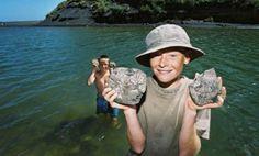 kiritehere beach -- fossil beach west of Waitomo