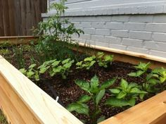 My Husband's Raised Bed is coming along