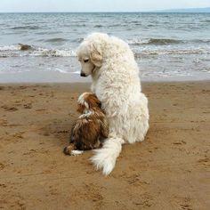 close friends...