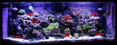 DIY LED Reef Tank Light Image 11