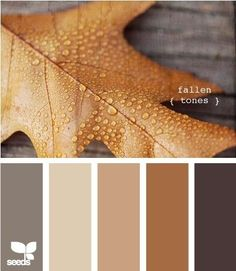 fallen tones - living room colors by susangir...the color s the outside of my house will be, dark brown siding, sand brick and trim, copper tin roof