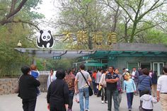 Beijing Zoo and Beijing Aquarium see those pandas