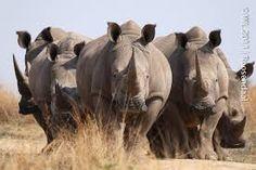 Afbeeldingsresultaat voor wilde dieren