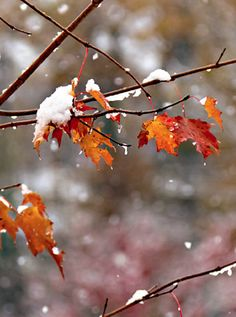 early winter, first snow