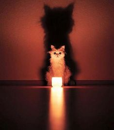 These Animals Look Like They're Performing A Satanic Ritual And It's Creepy - World's largest collection of cat memes and other animals I Love Cats, Crazy Cats, Cool Cats, Baby Animals, Funny Animals, Cute Animals, Creepy Animals, Beautiful Cats, Animals Beautiful