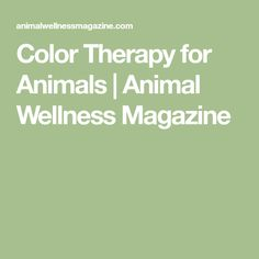 Color Therapy for Animals | Animal Wellness Magazine