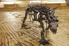 For 8 days in the Tumbler Ridge region, 6 of us rafted a remote river searching for dinosaurs. Dinosaur Bones, Dinosaur Fossils, Adventure Photos, Adventure Travel, Dawson Creek Bc, Prehistoric Dinosaurs, 8 Days, Travel Stuff, Rafting