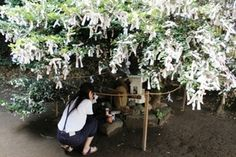 This is a prayer tree at a shrine in Japan. Same idea as the origami birds, but it might be cooler with birds. The best part is seeing all of them add up over time. Good advertisement on the street for the center.
