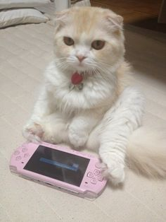 PSP - purrrrfect. #Cats are so cute!