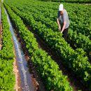 8 de Marzo: Día de la Mujer Trabajadora. Situación de la Mujer Rural
