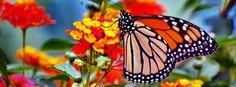 Belle couverture facebook papillon