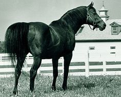 Horse Country Chic: Citation - The Gold Standard in Horse Racing