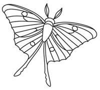 Explore natural wonders with these delicately drawn insect designs. Stitch them one at a time or overlap them for a collage effect. Designs download as PDFs; use pattern transfer paper to trace designs for hand-stitching.