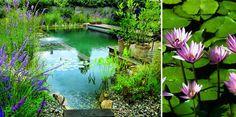 ¿A qué se denominan piscinas ecológicas? Hablamos de una piscina ecológica cuando no tiene productos químicos, ni cloro, ni sal, solamente agua natural. Las plantas se encargan de mantener el agua limpia y trasparente. Características generales:  Es un sistema de depuración natural para conservar la calidad del agua en vez de recurrir a productos químicos. Es una mezcla de estanque y piscina, y además es enriquecedora para cualquier tipo de jardín. Evita problemas deirritación de piel…